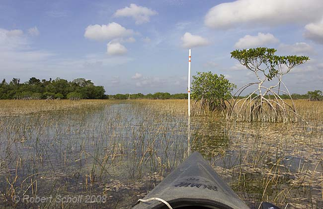 canoe trails in the everglades