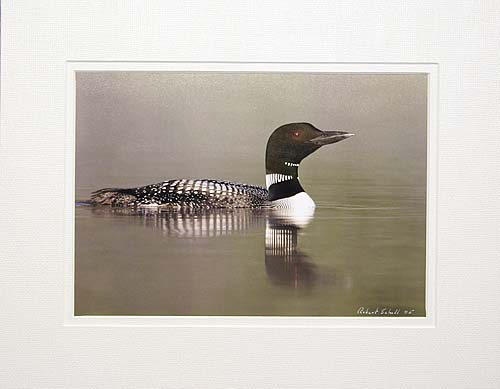 Common Loon Print